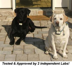 lab dogguard dogs